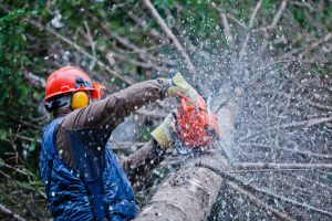 man trimming downed tree